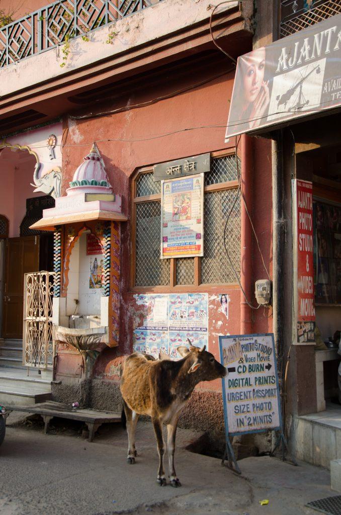 recorrimos Rajasthan en moto